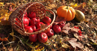 Seasonal Harvest Fairs Dot Our American Landscape